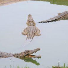 Water loving creatures