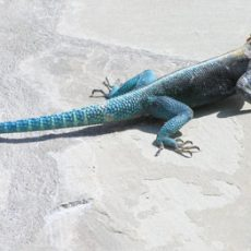 Chameleons and geckos